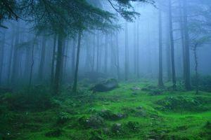 Deodar Forest at Himachal Pradesh