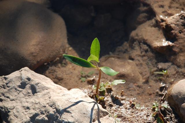 growth-445283_640.jpg