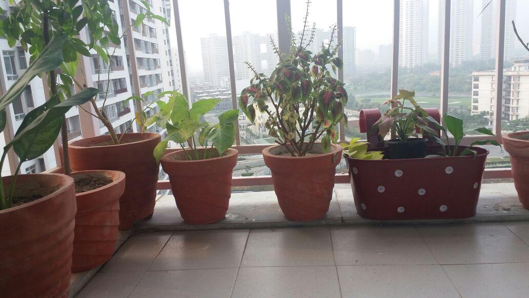 Balcony garden.jpeg